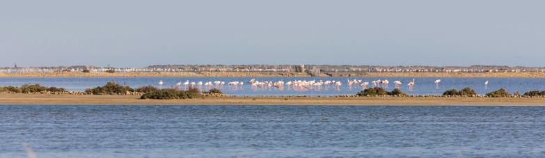 Découvrez Port Camargue, au cœur de <br> l'Occitanie