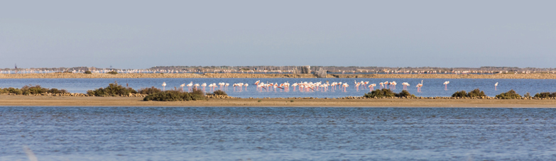 Destination les bains de Camargue